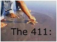 The411